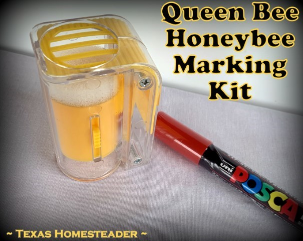 Queen bee honeybee one-handed queen marking cage with red marker pen. #TexasHomesteader