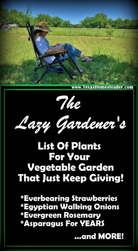Come see the list of plants in my vegetable garden that provide year after year with precious little input from me! #TexasHomesteader