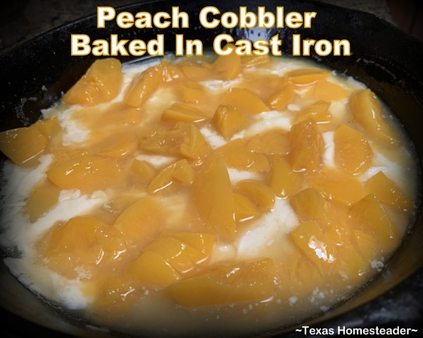 Canned peaches layered onto batter for peach cobbler baked in cast iron skillet. #TexasHomesteader