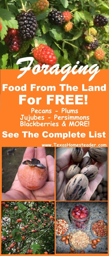A list of food we're able to forage from the land for FREE! #TexasHomesteader