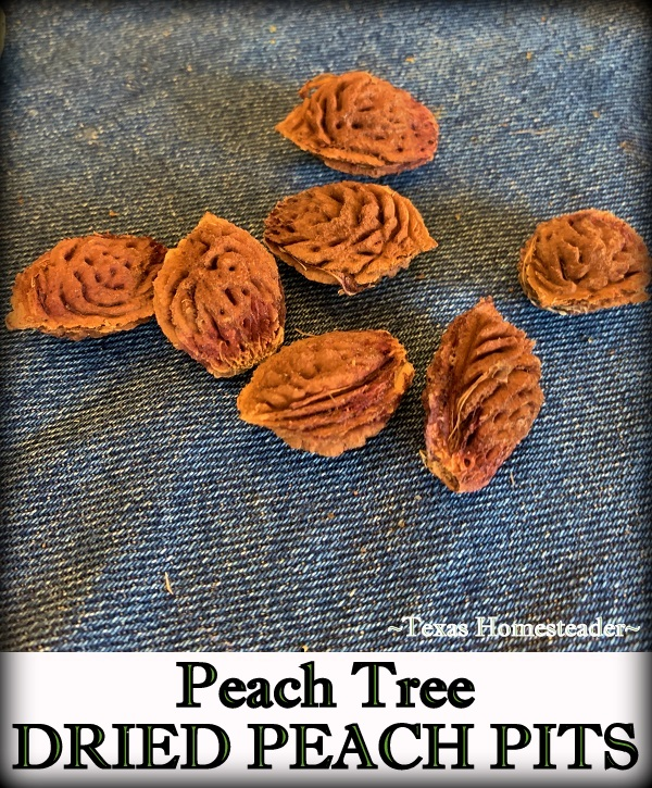 Dried peach pits for natural decoration. #TexasHomesteader